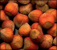 A bunch of hazelnuts to lower your cholesterol naturally