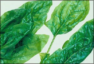 Leafy greens and spinach are perfect as foods that lower cholesterol