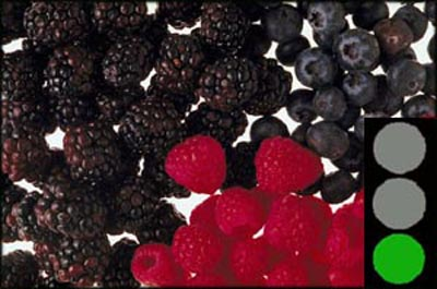There are lots of berries that are cholestorol free goods
