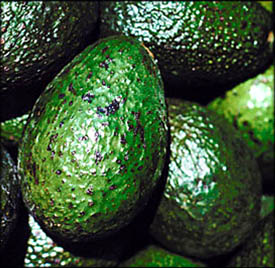 Lots of lovely avocados that are good foods to lower cholesterol: Many whole avocados.