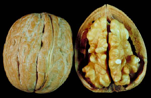 Walnuts are low cholesterol foods rich in healthy fats: Photo of walnut cut in half.