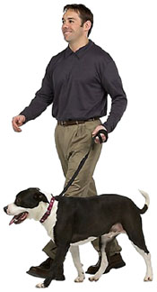 Avoiding symptoms of high cholesterol: Exercise more. Picture of a man walking his dog.