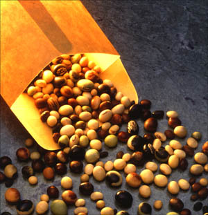 Soy is an excellent low cholesterol food: Picture of different soy beans.