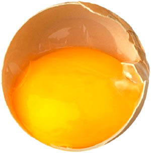 Eggs and cholesterol: The egg yolk is the cholesterol sinner.
