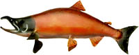 Fish, salmon, is great cholesterol lowering foods.