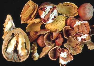 Nuts are rich in unsaturated fatty acids and omega 3.